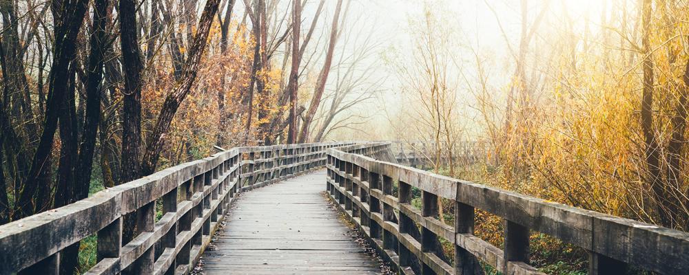 boardwalk in woods