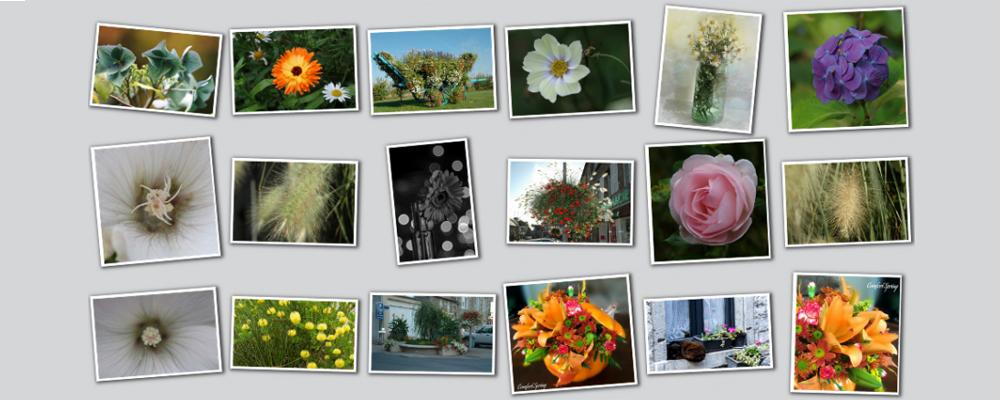 collage of colorful photos, mostly flowers